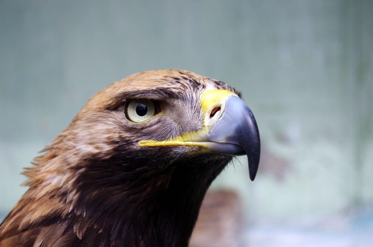 Adler Mein Bruder
