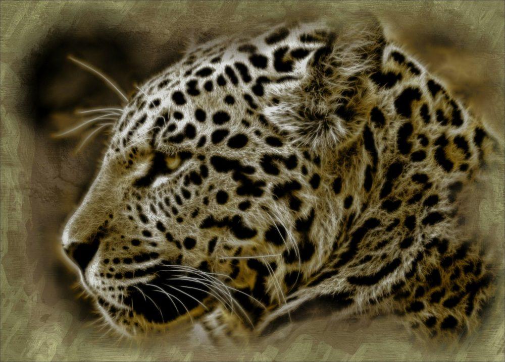 Der Jaguar Ist Das Heilige Tier Der Azteken